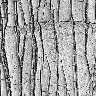Cracked Trunk Art Print by Paul Topp