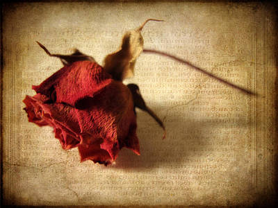 Dried Digital Art - Crackling Rose by Jessica Jenney