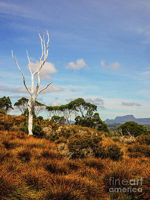 Photograph - Cradle Mountain And Tree by Lexa Harpell