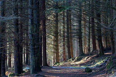Photograph - Craig Dunain - Forest In Winter Light by Karen Van Der Zijden