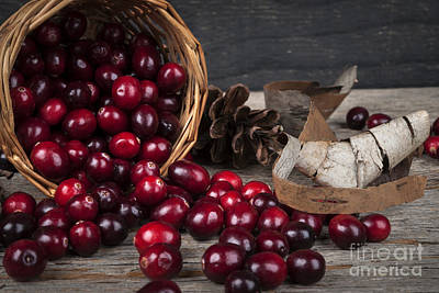 North American Photograph - Cranberries Still Life by Elena Elisseeva
