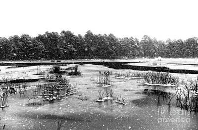 Photograph - Cranberry Bog In Winter by John Rizzuto