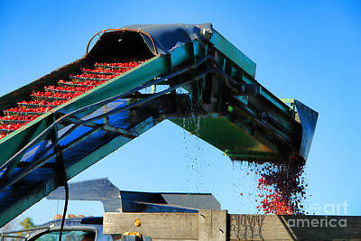 Cranberry Conveyor Print by Olivier Le Queinec