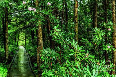Photograph - Cranberry Glades Boardwalk by Thomas R Fletcher