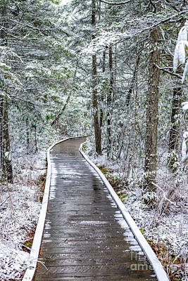 Photograph - Cranberry Glades Boardwalk With Snow by Thomas R Fletcher