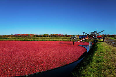 Photograph - Cranberry Harvest 2 by M G Whittingham