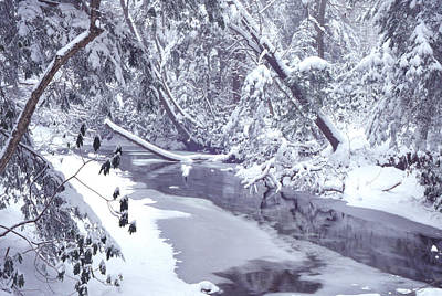 Cranberry River Winter Heavy Snow Print by Thomas R Fletcher