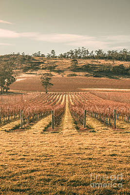 Photograph - Cranbrook Vineyard by Jorgo Photography - Wall Art Gallery