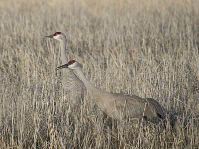 Photograph - Crane Camouflage by Loree Johnson