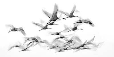 Dreamlike Wall Art - Photograph - Crane Flight Ballet by Linda Oliver