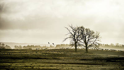 Photograph - Crane Hill by Torbjorn Swenelius
