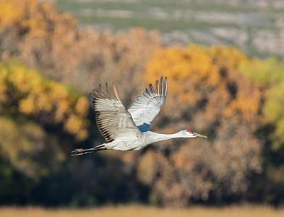 Photograph - Crane In Autumn by Loree Johnson