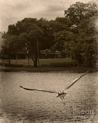 Crane In Flight Art Print