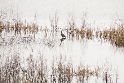 Crane In Reeds Art Print by Laura Pratt