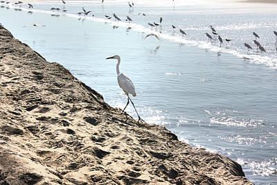 Photograph - Crane On The Shore by Gravityx9 Designs