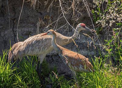 Photograph - Crane Training by Loree Johnson
