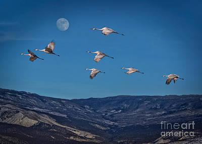 Cranes Across Colorado Blue Art Print