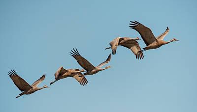 Photograph - Cranes Ascending by Loree Johnson