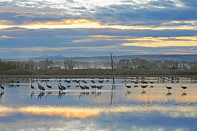 Photograph - Cranes At Dawn 1 by Diana Douglass