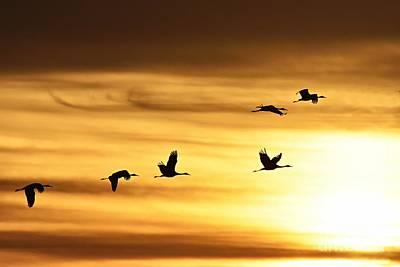 Cranes At Sunrise 2 Art Print by Larry Ricker