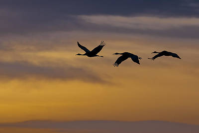 Photograph - Cranes In Flight by Gary Lengyel
