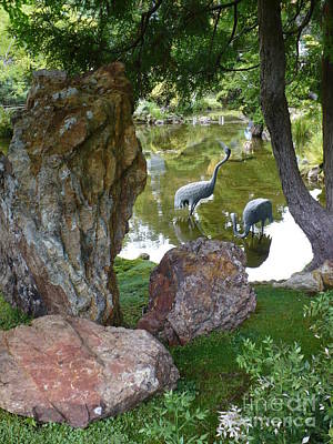 Photograph - Cranes In Japanese Garden Pond by Carol Groenen
