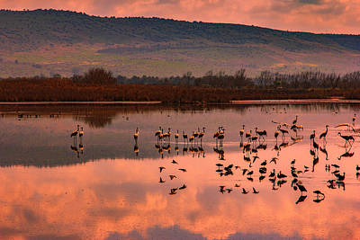 Womens Empowerment - Cranes of Hula Valley by Mark Perelmuter