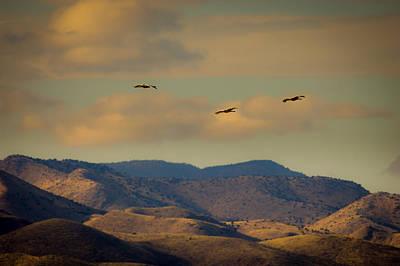 Ballerina Art - Cranes Over Chupadera Mountains by Jeff Phillippi