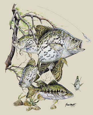 Crappie And Bass Art Print