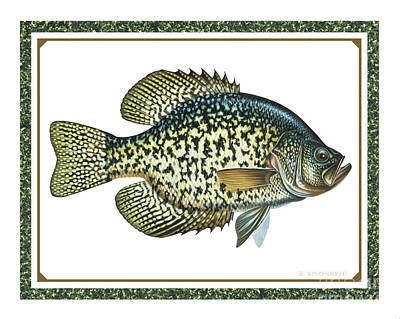 Crappie Painting - Crappie Print by JQ Licensing