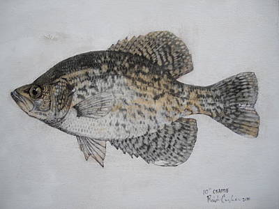 Panfish Painting - Crappie by Robert Cunningham