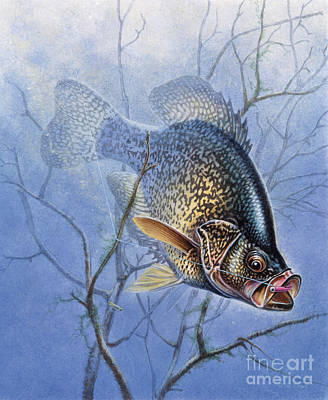 Crappie Twigs Art Print by Jon Wright