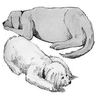 Bichon Frise Drawing - Crash And Potts by Jamison Kaufman