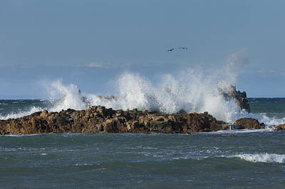 Photograph - Crashing Waves And Gulls by David Watkins