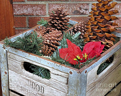 Photograph - Crate Of Pine Cones by Janice Drew