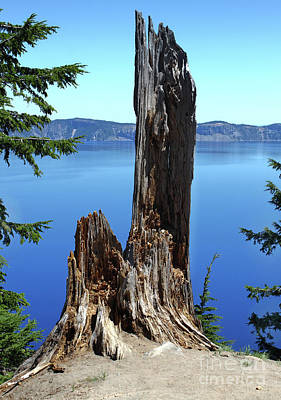 Photograph - Crater Lake Dead Tree by Gregory Dyer