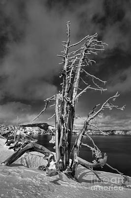 Photograph - Crater Lake Dead Trees Portrait - Black And White by Adam Jewell