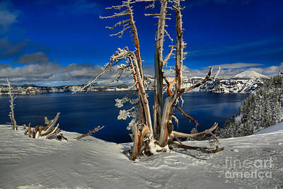 Photograph - Crater Lake Winter Dead Wood by Adam Jewell