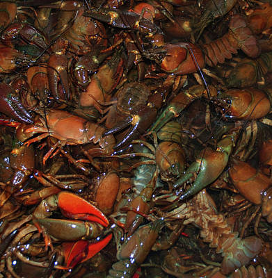 Vermeer Rights Managed Images - Crawdad Palooza Royalty-Free Image by Scotty Baby