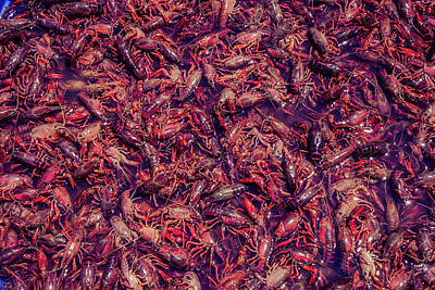 Photograph - Crawfish Party by Stefanie Silva