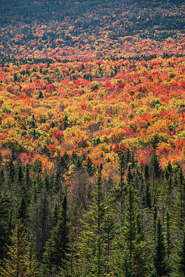 Photograph - Crawford Notch Fall by Robert Clifford