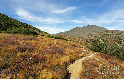 Photograph - Crawford Path - Mt Washington New Hampshire by Erin Paul Donovan