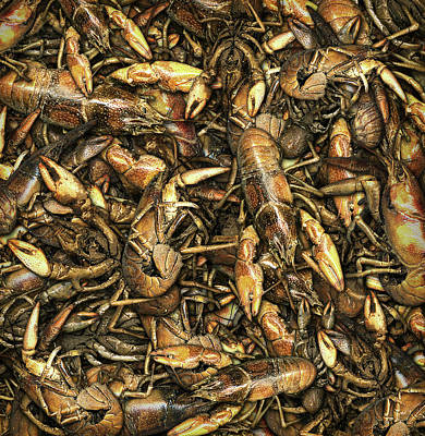 Digital Art - Crayfish by James Larkin