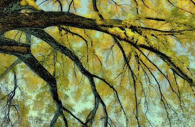 Photograph - Crayola Fern Green by JAMART Photography