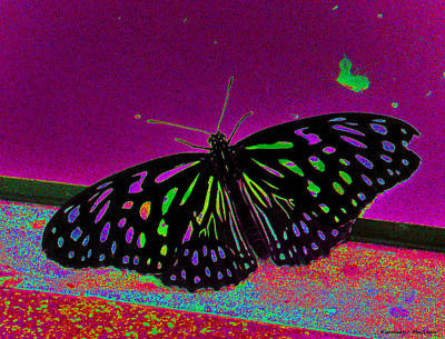 Photograph - Crayon Butterfly by Kimmary MacLean