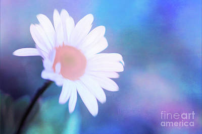 Photograph - Crazy Daisy by Anita Pollak