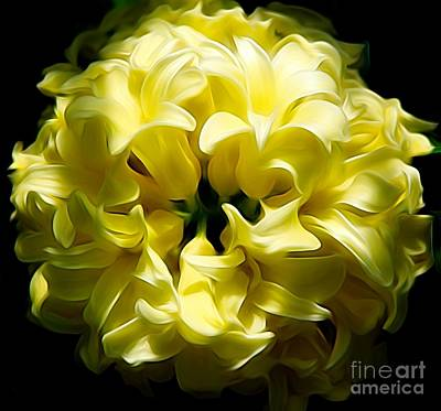 Photograph - Cream Colored Hyacinths Flower Abstract by Rose Santuci-Sofranko