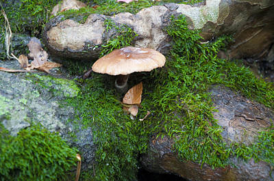 Mushroom Digital Art - Cream Of Mushroom by Bill Cannon