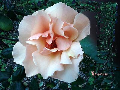 Photograph - Cream Rose - Brandy by Sadie Reneau