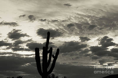 Photograph - Creamtone Sunrise by Deniece Platt